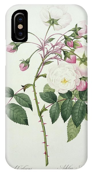Botanical iPhone Case - Adelia Aurelianensis by Pierre Joseph Redoute