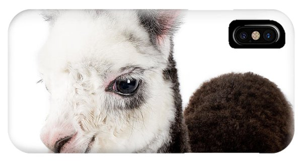 Adorable Baby Alpaca Cuteness IPhone Case