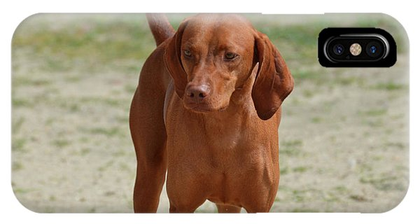 Adorable Redbone Coonhound Standing Alone IPhone Case