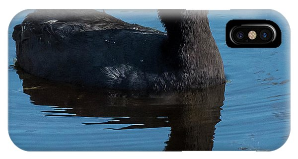 Adult American Coot IPhone Case