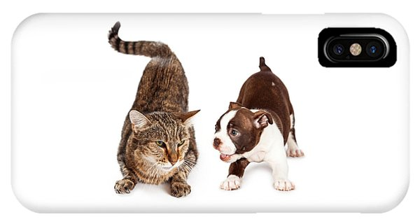 Adult Cat Annoyed With Playful Puppy IPhone Case