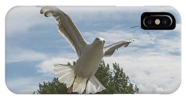 Adult Seagull In Flight IPhone Case
