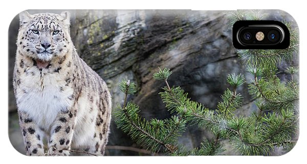 Snow Leopard iPhone Case - Adult Snow Leopard Standing On Rocky Ledge by Jane Rix