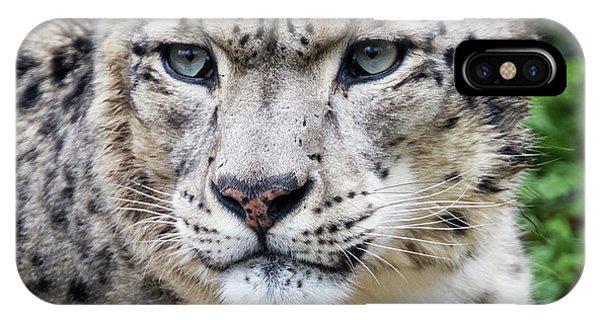 Snow Leopard iPhone Case - Adult Snow Leopard Portrait by Jane Rix