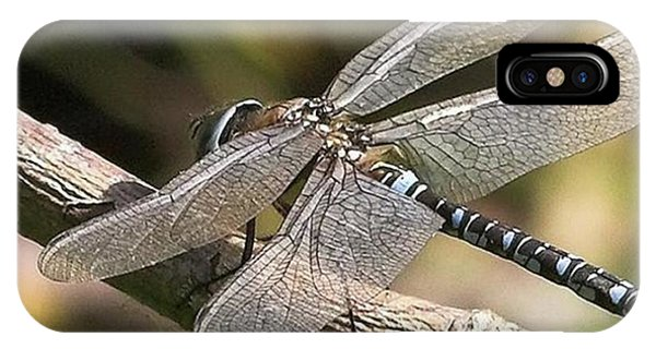 Animals iPhone Case - Aeshna Juncea - Common Hawker Taken At by John Edwards
