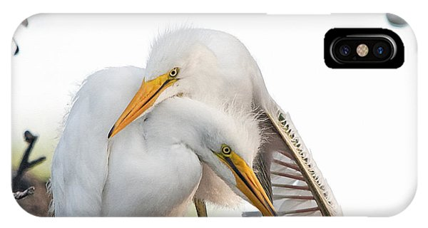 Egrets iPhone Case - Affectionate Chicks by Kenneth Albin