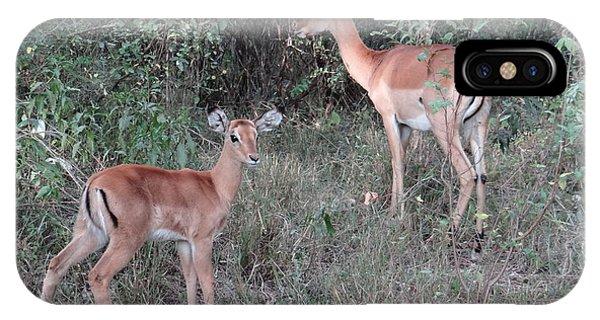 Africa - Animals In The Wild 2 IPhone Case