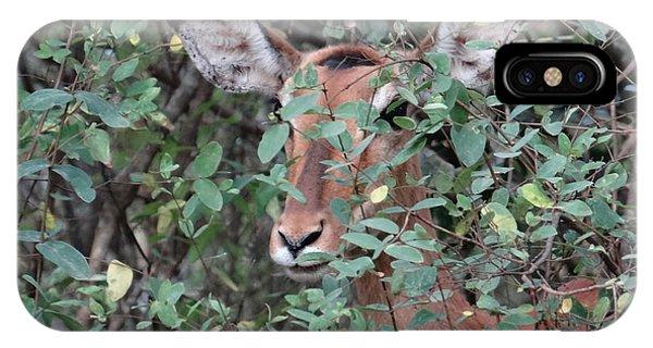 Exploramum iPhone Case - Africa - Animals In The Wild 4 by Exploramum Exploramum