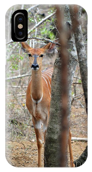 Africa Safari Bushbuck 2 IPhone Case