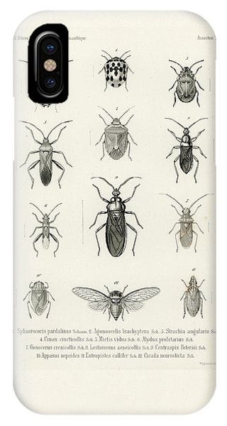 African Bugs And Insects IPhone Case