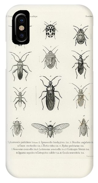 IPhone Case featuring the drawing African Bugs And Insects by W Wagenschieber