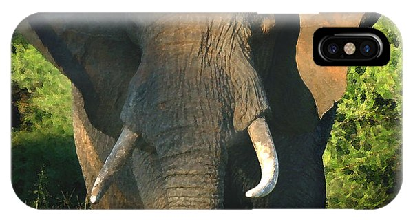 African Bull Elephant IPhone Case