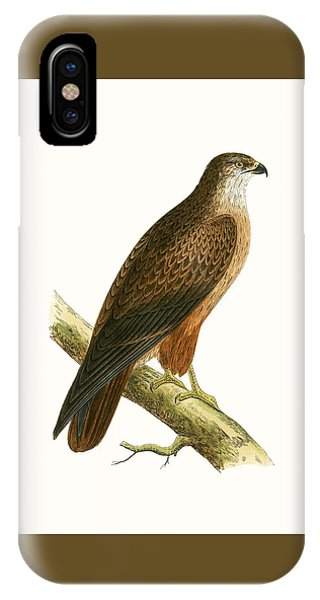 Buzzard iPhone Case - African Buzzard by English School