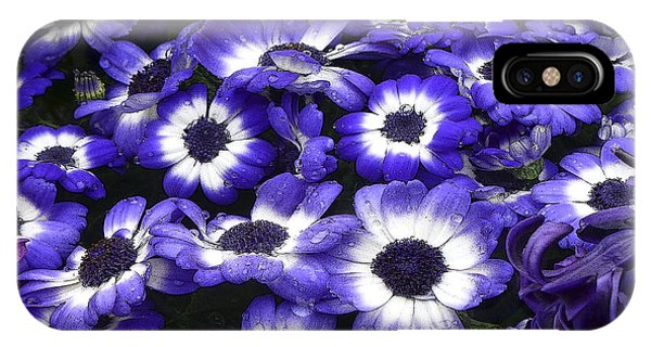 African Daisy Purple And White IPhone Case