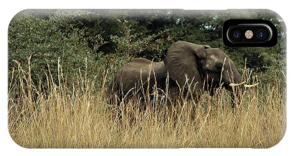 African Elephant In Tall Grass IPhone Case