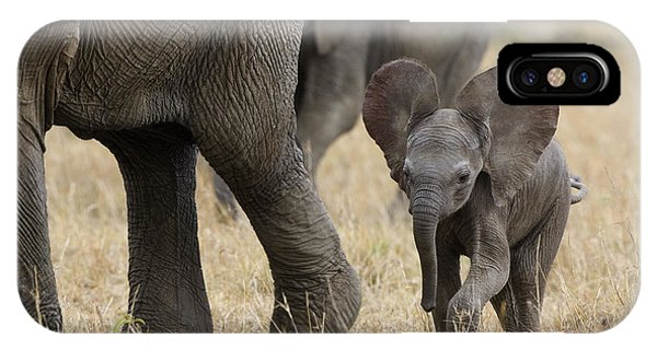 African Elephant Mother And Under 3 IPhone Case