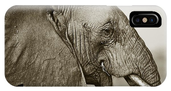 African Elephant Profile  Duotoned IPhone Case