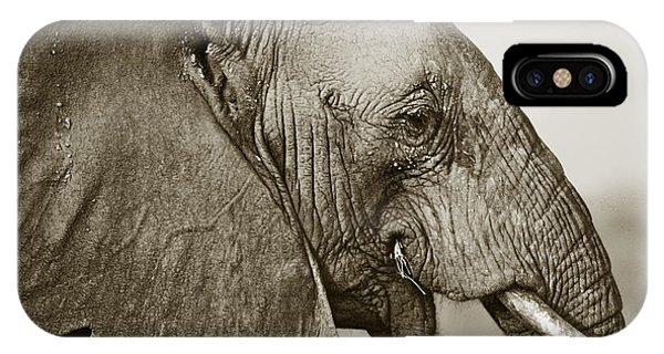 African Elephant Profile  Duotoned IPhone Case
