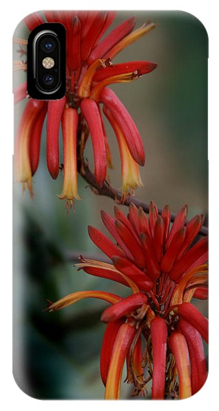 African Fire Lily IPhone Case