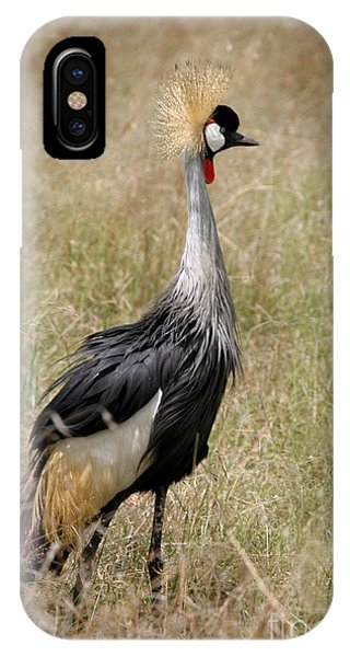 African Grey Crowned Crane IPhone Case