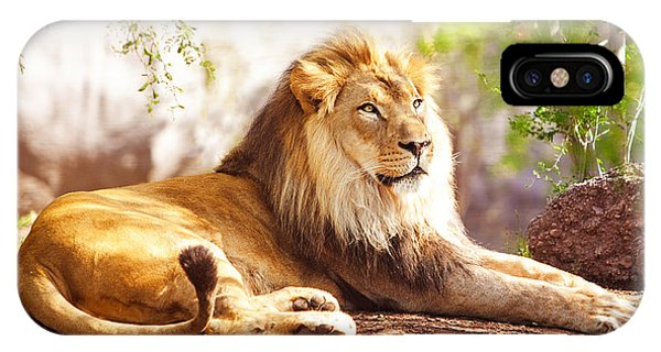 African Lion Laying In Forest IPhone Case