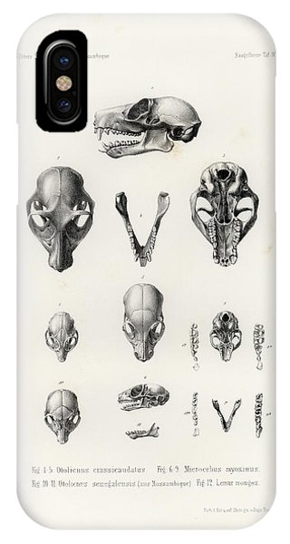 African Mammal Skulls IPhone Case