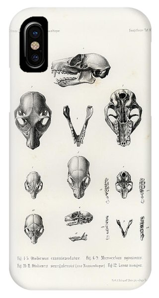 IPhone Case featuring the drawing African Mammal Skulls by Hugo Troschel