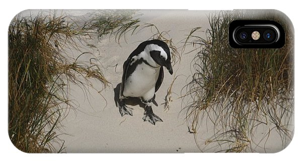 African Penguin On A Mission IPhone Case
