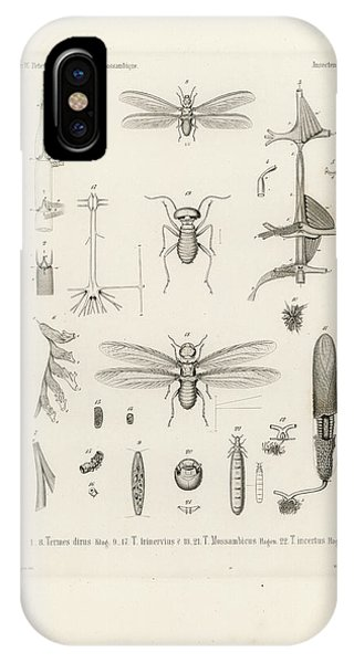 IPhone Case featuring the drawing African Termites And Their Anatomy by W Wagenschieber
