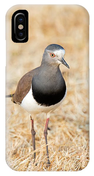 African Wattled Lapwing Vanellus IPhone Case