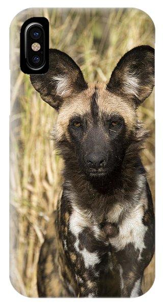 IPhone Case featuring the photograph African Wild Dog Okavango Delta Botswana by Suzi Eszterhas