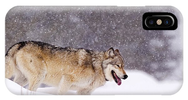 Agate Wolf 113m In Falling Snow IPhone Case
