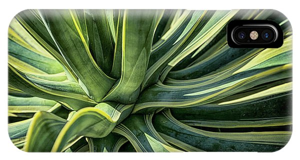Agave Burst 4 IPhone Case