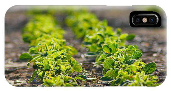 Agriculture- Soybeans 1 IPhone Case