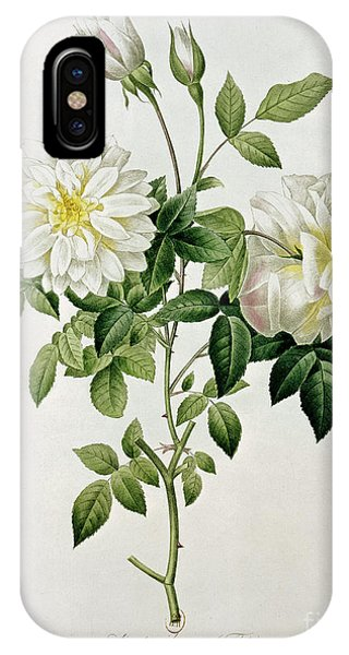 Botanical iPhone Case - Aime Vibere by Pierre Joseph Redoute