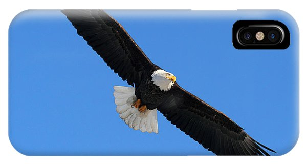 Alaska Bald Eagle IPhone Case