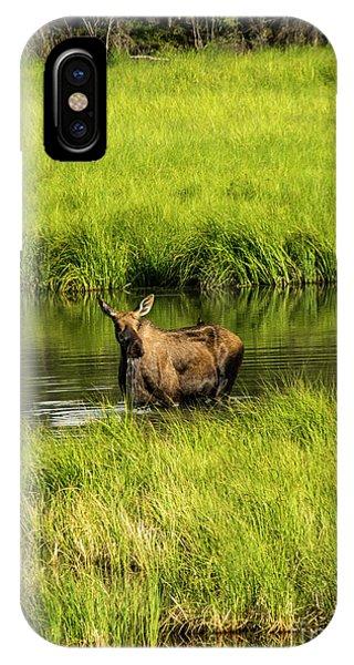 Alaskan Moose IPhone Case