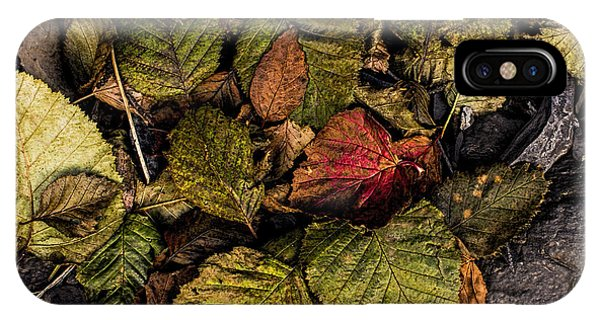 IPhone Case featuring the photograph Alder Leaves Dan Creek 2015 by Fred Denner