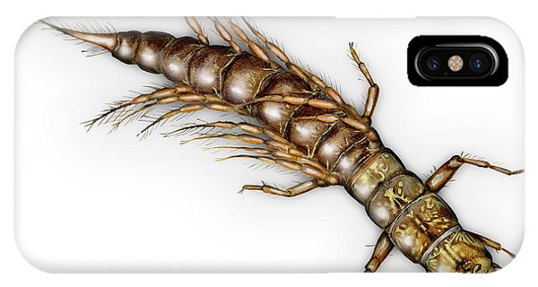 Alderfly Sialis Lutaria Larva Nymph -  Sialis De La Vase - Mudde IPhone Case