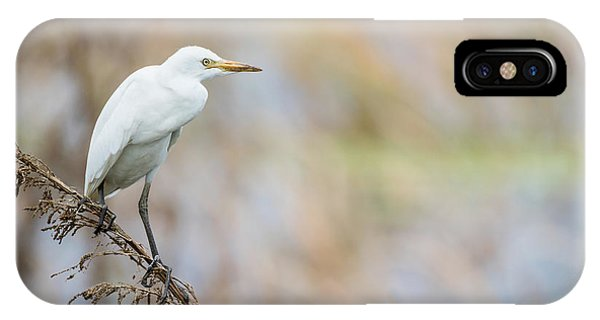Alert Egret IPhone Case
