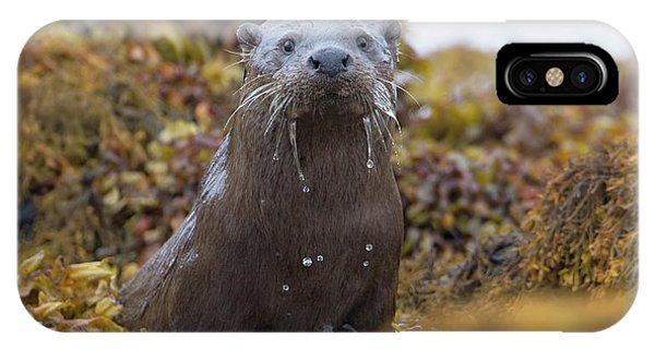 Alert Female Otter IPhone Case