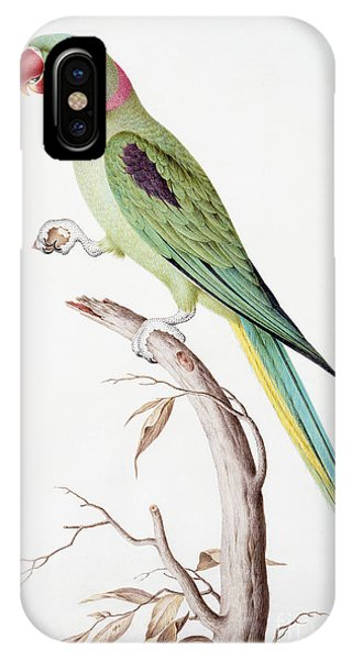 Alexandrine Parakeet IPhone Case