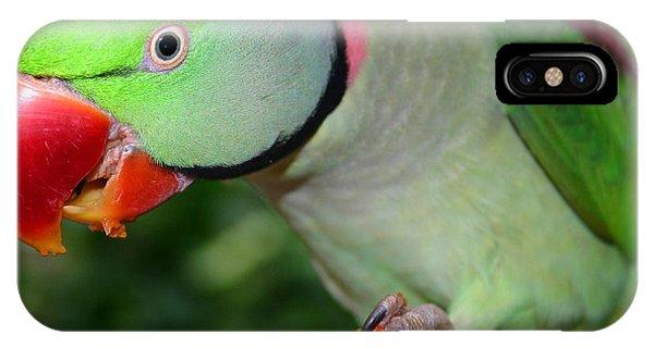 Alexandrine Parrot Feeding IPhone Case