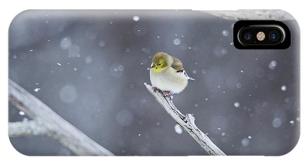 IPhone Case featuring the photograph All Fluffy by Wanda Krack
