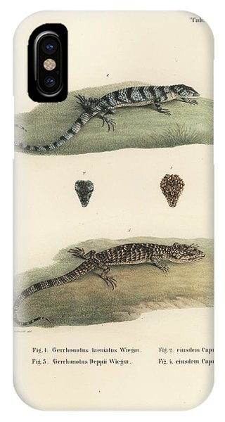 IPhone Case featuring the drawing Alligator Lizards by Friedrich August Schmidt