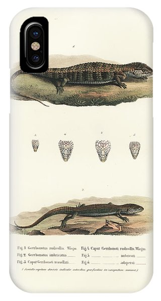 Alligator Lizards From Mexico IPhone Case
