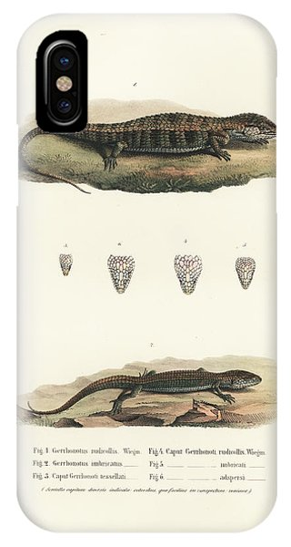 IPhone Case featuring the drawing Alligator Lizards From Mexico by Friedrich August Schmidt