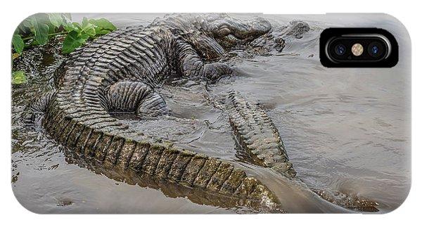 Alligators Courting IPhone Case