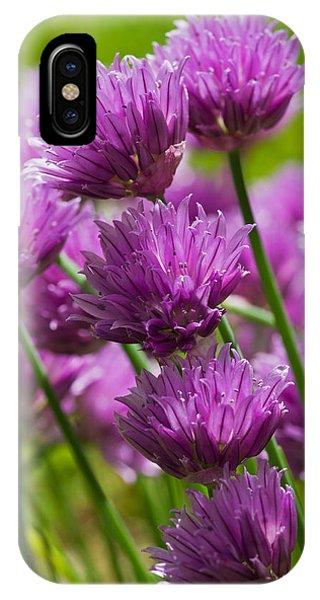 Allium Blooms IPhone Case
