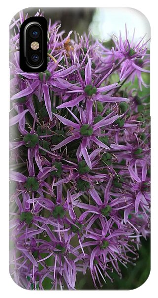 iPhone Case - Allium Stars  by Kathy Spall